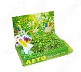 Набор подарочный для выращивания Happy Plants «Живая открытка: Лето круглый год»