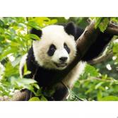 Пазл 500 элементов Trefl «Панда»