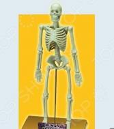 Наглядное пособие Eastcolight «Скелет человека»