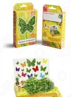 Набор подарочный для выращивания Happy Plant «Живая открытка: Поздравляю-Хорошего настроения!»