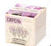 Набор для выращивания Экокуб «Сирень Венгерская»