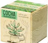 Набор для выращивания Экокуб «Сосна»