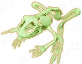 Наглядное пособие Eastcolight «Скелет лягушки»