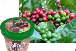 Набор для выращивания Зеленый капитал Вырасти, дерево! «Кофе арабский»