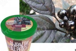 Набор для выращивания Зеленый капитал Вырасти, дерево! «Перец декоративный»