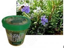 Набор для выращивания Зеленый капитал Вырасти, дерево! «Розмарин»