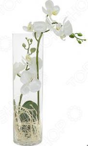 Декоративные цветы Dream Garden «Орхидея белая» в стеклянной вазе