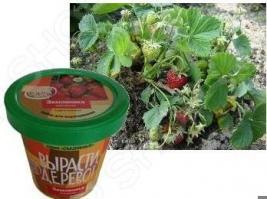 Набор для выращивания Зеленый капитал Вырасти, дерево! «Земляника ананасная»