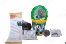 Набор для выращивания Зеленый капитал Вырасти, дерево! «Кедр сибирский»