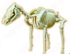 Наглядное пособие Eastcolight «Скелет лошади»